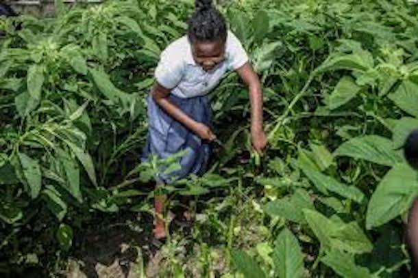 Abidjan accueille le forum « Leadership pour l'agriculture», le 28 novembre