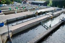 Cameroun : 1,6 milliard de Fcfa d'investissements pour l'agropole de pisciculture de Bazou