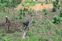 Togo : l'économie renouera avec la croissance dès cette année