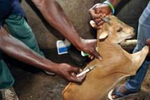 Eradication de la peste des petits ruminants : Aminata Mbengue Ndiaye annonce un plan national de 12 milliards de FCfa