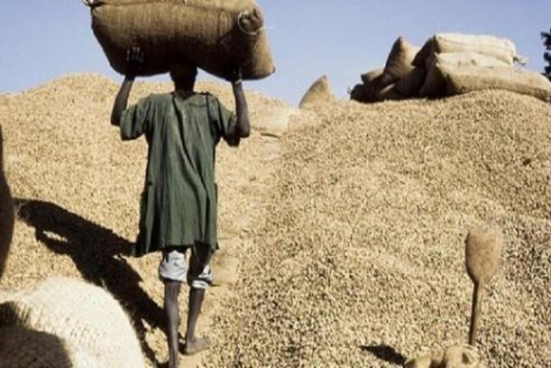 Blocage de la campagne arachidière : les Ops de Ziguinchor réclament 6 milliards F Cfa à la Sonacos