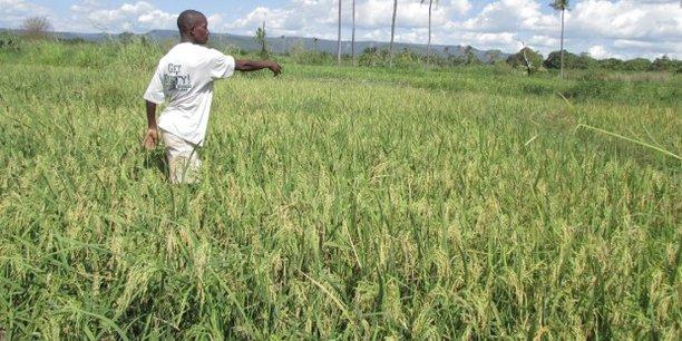 Maroc : la BAD finance un programme de développement agricole à hauteur de 200 millions USD