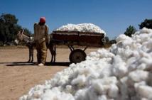 Pour booster le secteur coton à Kita : IBK en communion avec son peuple