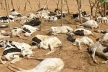 Ranch de Dolly : Plus de 10 000 moutons et chèvres tués par la forte pluie
