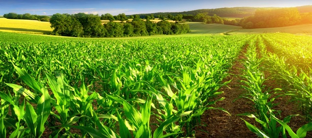 BAD/FAO : une alliance stratégique pour mobiliser 57 milliards FCFA en faveur de l'agriculture
