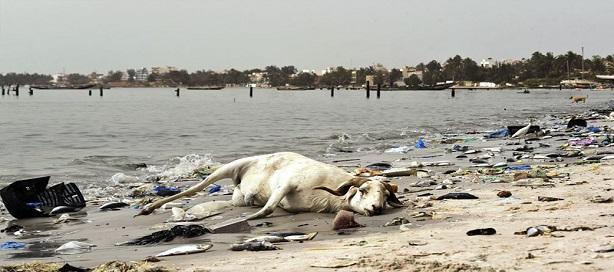 L'Etat du Sénégal a maintenant de quoi prendre en charge, de manière durable, la question de la dépollution et de la valorisation de la Baie de Hann.