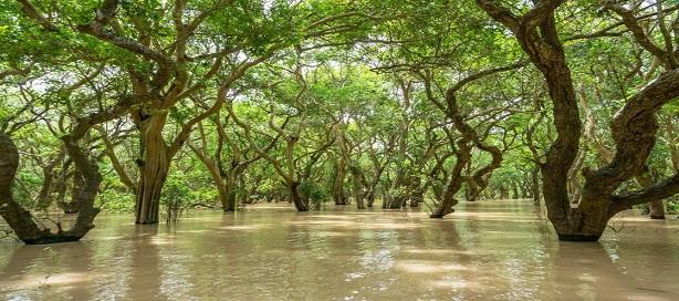 Les mangroves sont considérées aujourd'hui comme étant l'arme la plus efficace pour lutter contre l'érosion des côtes littorales.