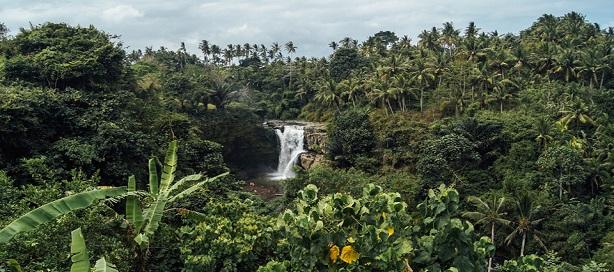Nouveau projet pour renforcer la gestion durable des forêts en Afrique de l'Ouest