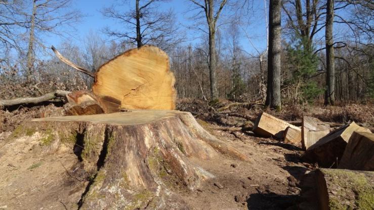 Cinq facteurs responsables de la perte de biodiversité et cinq leviers d'actions