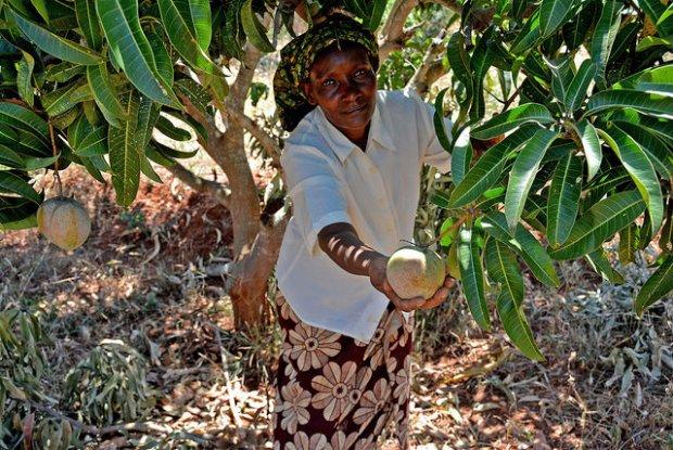 Pour une agriculture adaptée aux changements climatiques.