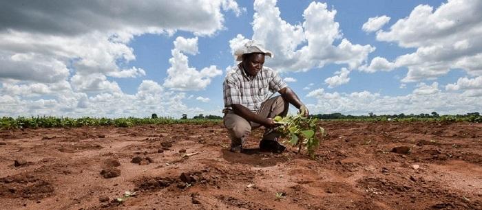 Adapter l'agriculture africaine au changement climatique