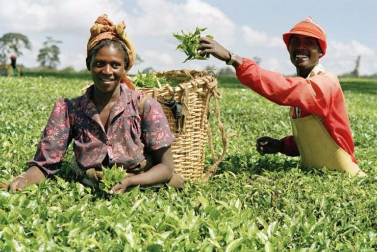 Nigéria : principales perspectives du commerce agricole pour les exportateurs américains