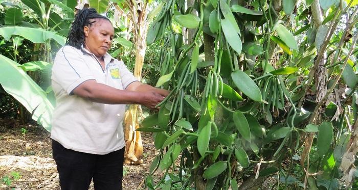 Gambie : principales perspectives du commerce agricole pour les exportateurs américains