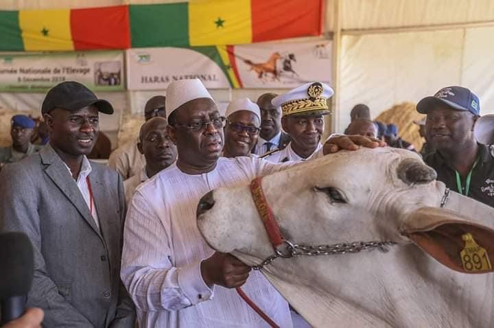 Journée nationale de l'élevage  au Sénégal