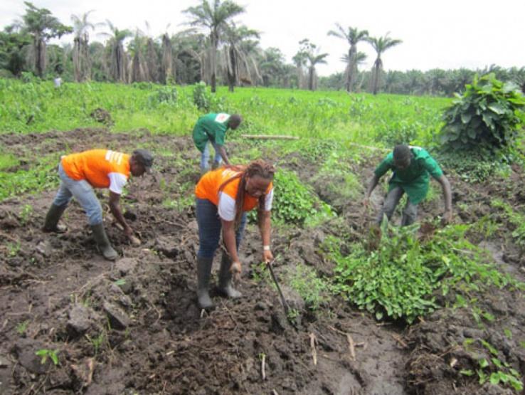 Afrique : l'âge moyen de la main-d'œuvre agricole varie d'environ 32 ans à 39 ans