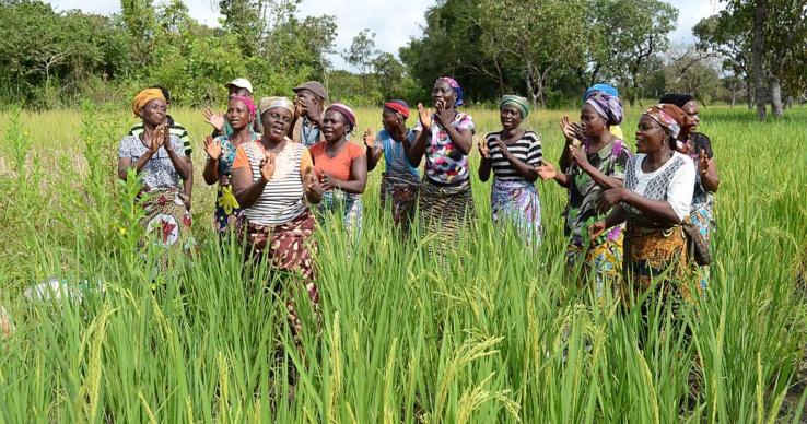 Bénin : hausse significative des rendements agricoles et revenus des exploitants