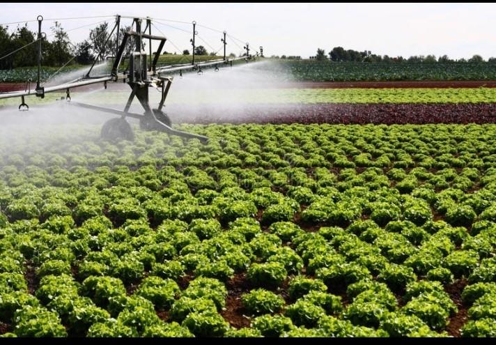 Irrigation solaire en Egypte.