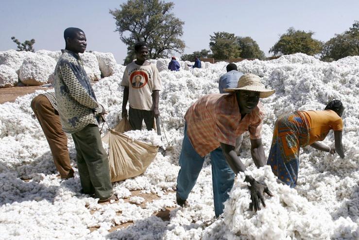Exportation du coton au Bénin.