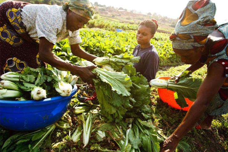 Bad-Bei : un partenariat pour accélérer le développement en afrique
