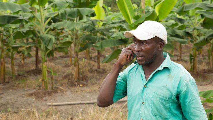 Agriculture africaine numérique.