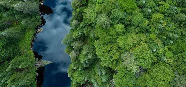 Nestlé adopte une stratégie positive pour les forêts.