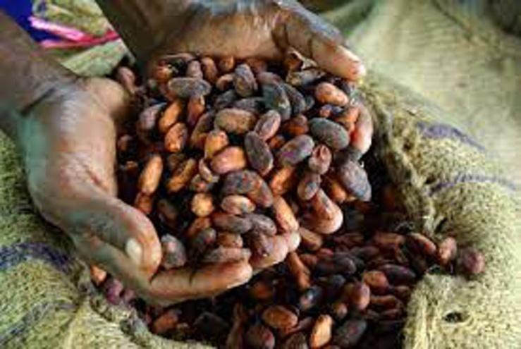 Les producteurs de cacao d'Afrique de l'Ouest sont en grande partie pauvres malgré la valeur de leur récolte. Irene Scott/Wikimedia Commons , CC BY-SA
