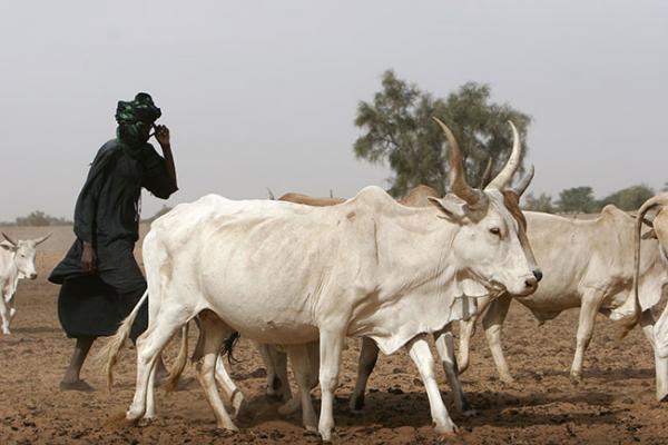 Sénégal : Regain de l'activité économique interne en Mars