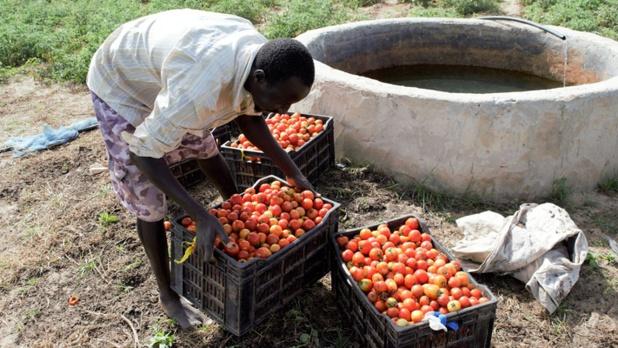 PARERBA: vers la création de 6000 emplois agricoles et agro-alimentaires dans cinq régions du Sénégal