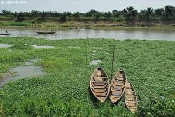 Fonds vert pour le climat : la FAO soutient une dizaine de projets en Afrique