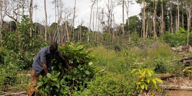 Côte d'Ivoire : l'émergence hypothéquée par le changement climatique