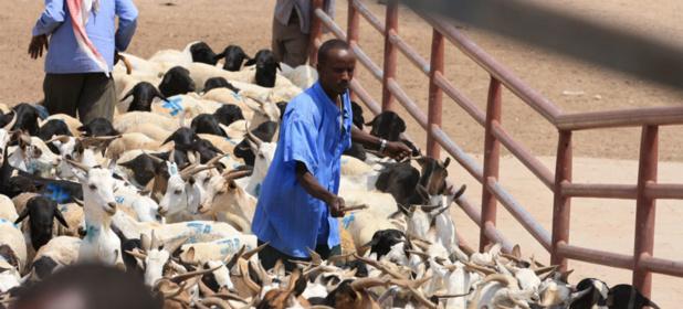 Agir vite pour empêcher les crises de se transformer en urgences humanitaires (FAO)