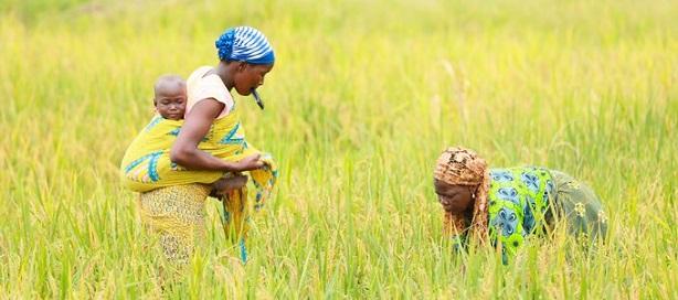 La Côte d'Ivoire sur la voie de la transformation agricole avec l'appui de la Bad.