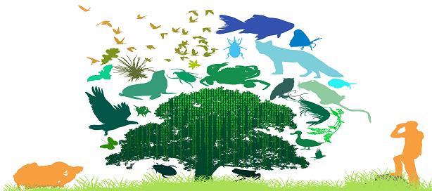 La FAO présente son dernier rapport relatif à l'état de la biodiversité mondiale pour l'alimentation et l'agriculture.
