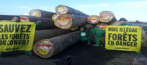Dix entreprises européennes pourraient importer vers l'UE du bois congolais illégal représentant plusieurs millions d'euros
