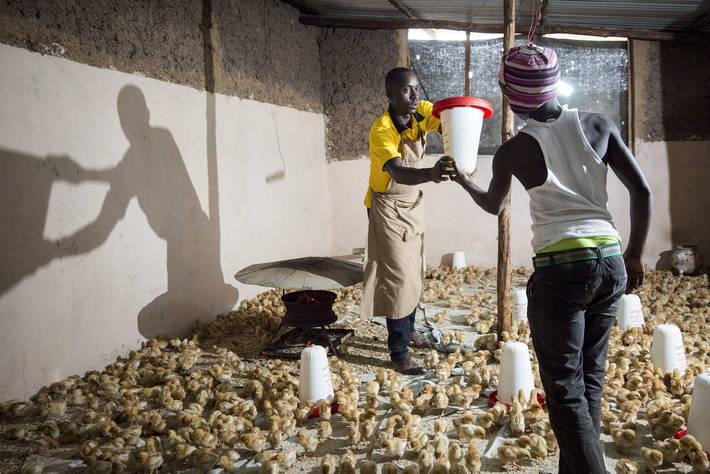 Initiative phare visant à augmenter les emplois des jeunes dans l'agriculture et l'agroalimentaire en Afrique
