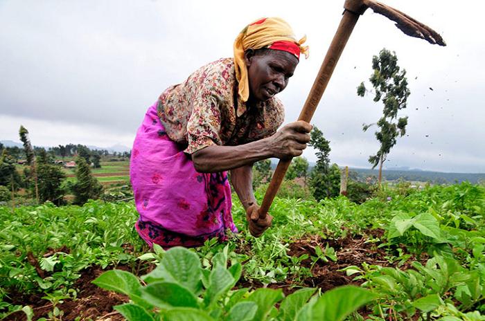 Ghana : principales perspectives du commerce agricole pour les exportateurs américains