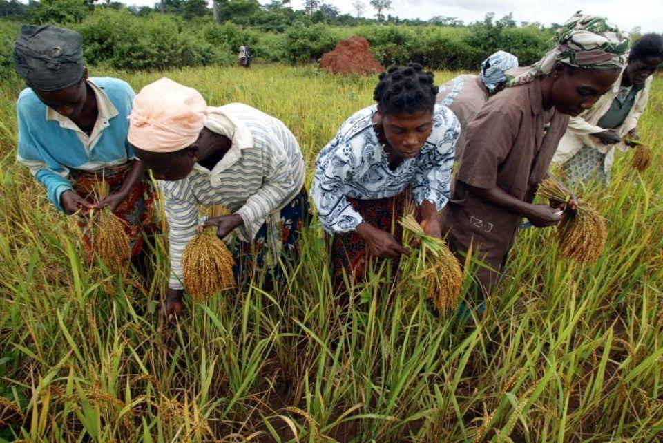 Côte d'Ivoire : principales perspectives du commerce agricole pour les exportateurs américains
