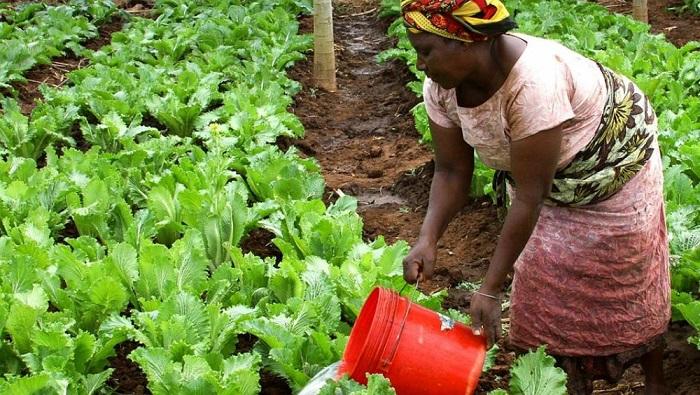 Sénégal : 5 000 fermiers visés pour bénéficier de la 3e campagne du programme OCP School Lab