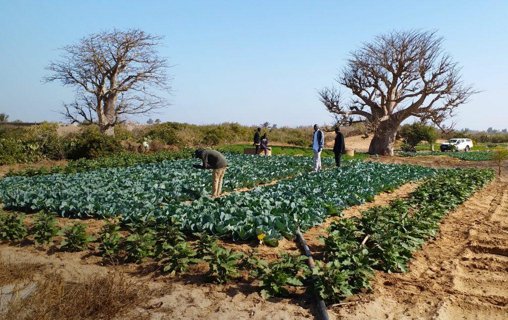 Systèmes semenciers en Afrique