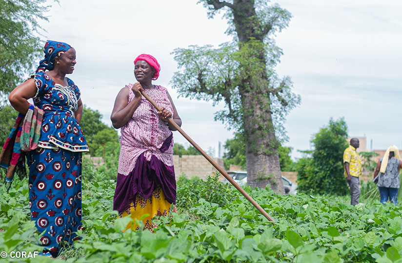 Les mesures des gouvernement pour freiner la pandémie ont impacté la chaîne de valeur agricole (image Coraf)