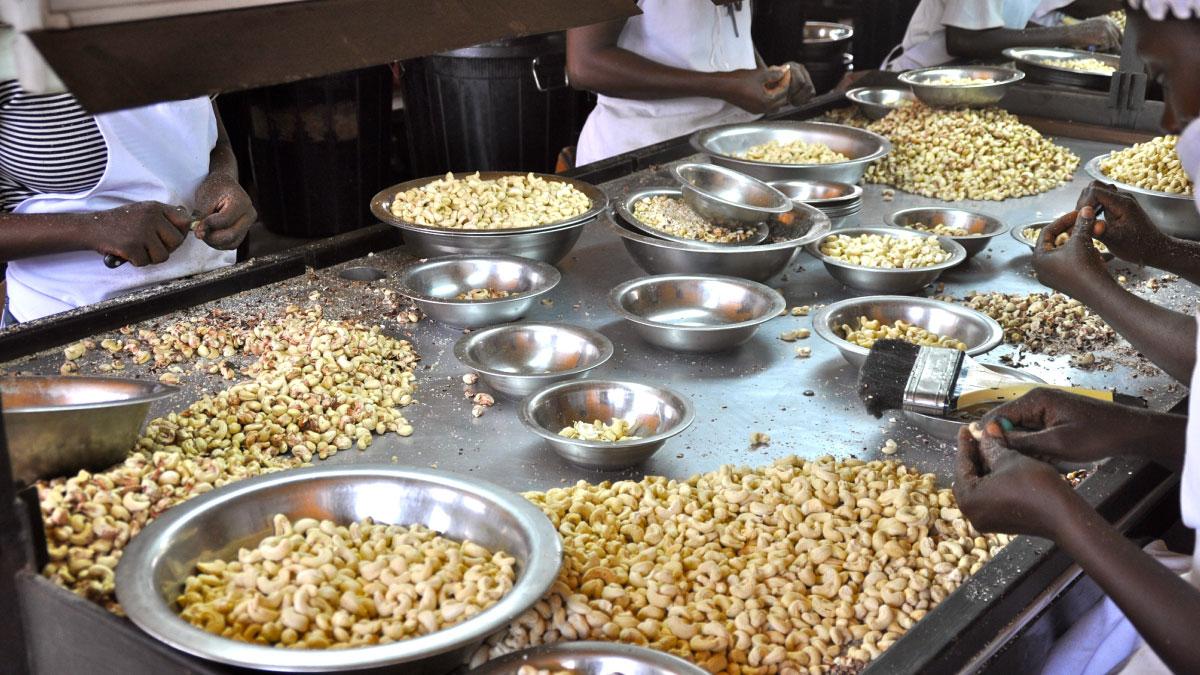 Les travailleurs nettoient les noix de cajou. Moins de 15% des fruits à coque cultivés en Afrique sont décortiqués sur le continent. / © Renate Wefers