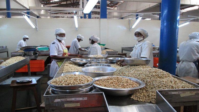 Une usine ivoirienne de transformation de la noix de cajou.