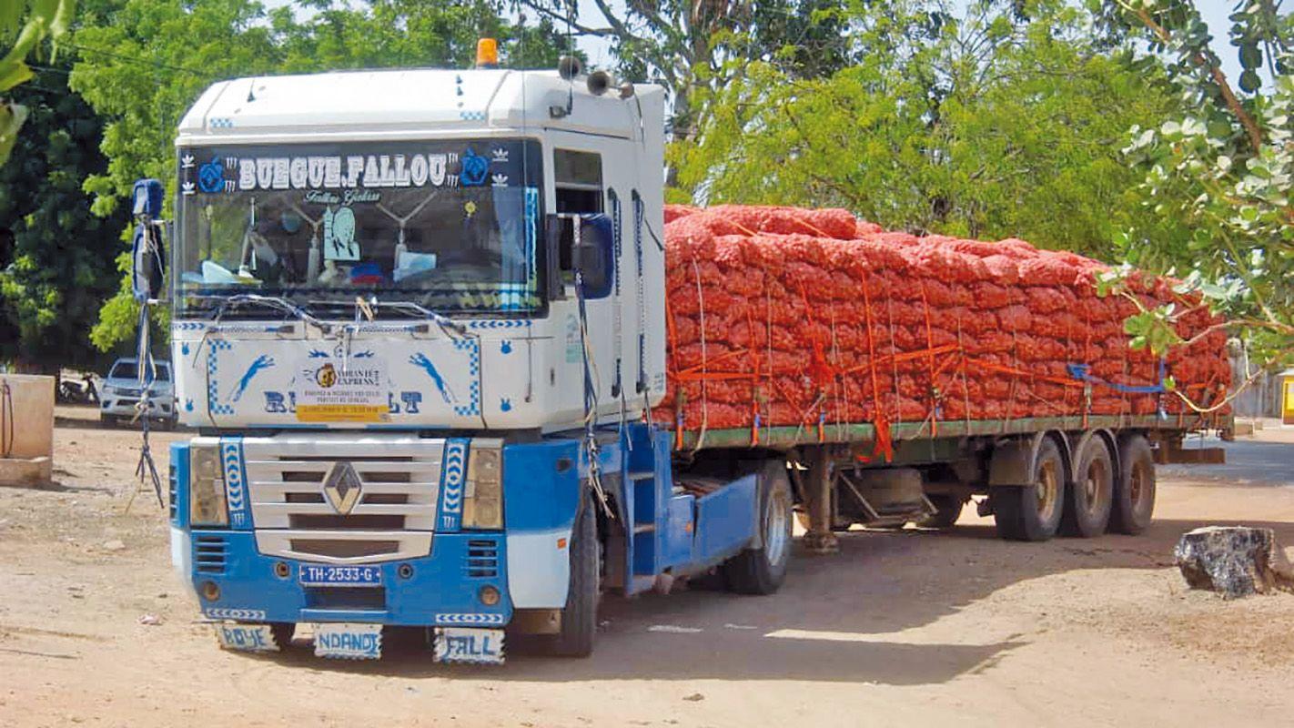 Sénégal : le geste à double impact du projet d'appui à la réduction de l'émigration rurale et à la réinsertion dans le bassin arachidier