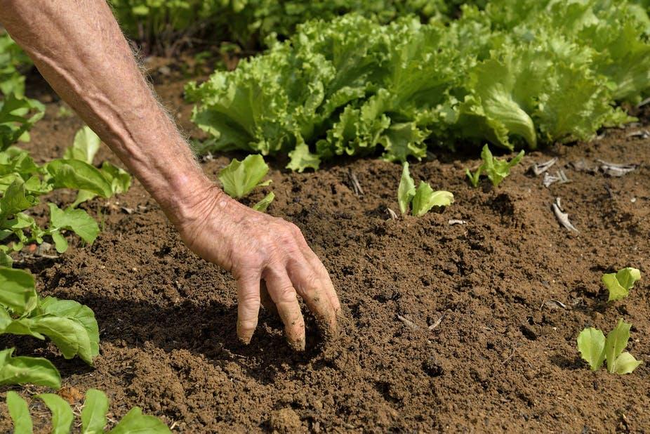 Pour la Fao, la santé des sols a une influence déterminante sur la durabilité des systèmes agroalimentaires.