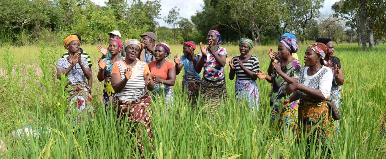 Bénin: la production vivrière en bonne voie