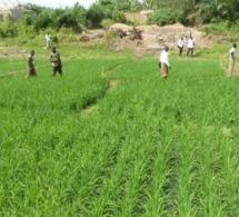 Burkina Faso : l'agriculture et l'élevage génèrent 80% de l'emploi, et à peine 30% du PIB