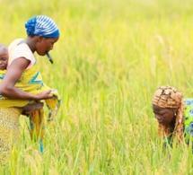 Transformation agricole : la Côte d'Ivoire en voie pour matérialiser la stratégie de la Bad