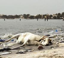 Sénégal : plus de 13 milliards FCFA des Pays bas pour dépolluer la Baie de Hann