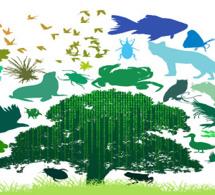 Un rapport de la FAO analyse la situation des végétaux, des animaux et des micro-organismes