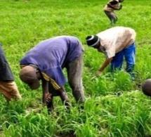 PSE : les résultats du rapport sur les allocations budgétaires du secteur agricole